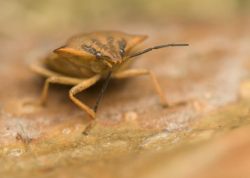 garden pest